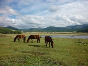 mongolia lake horses