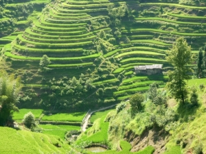 RS Rice terraces in Basha