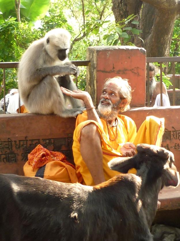 Cow, Monkey, Baba, Rishikesh